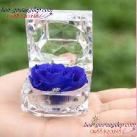 Hoa hồng bất tử - Hộp nhẫn-Xanh Navy