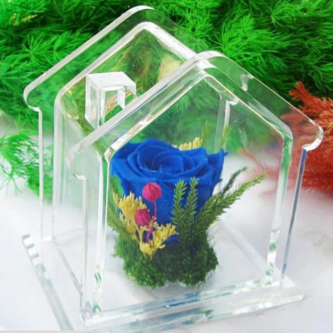 Hoa hồng bất tử - Ngôi nhà hạnh phúc - xanh